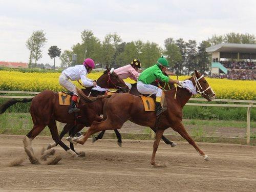 مسابقه اسب دوانی